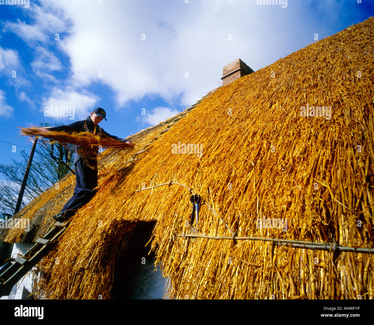 thatchers at work - Stock Image