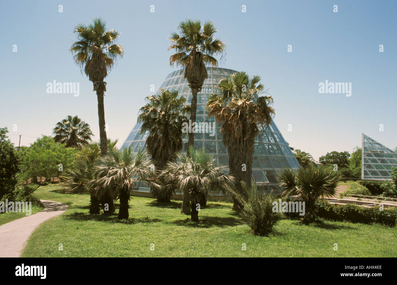 San Antonio Texas Usa Botanical Garden Conservatory Palm