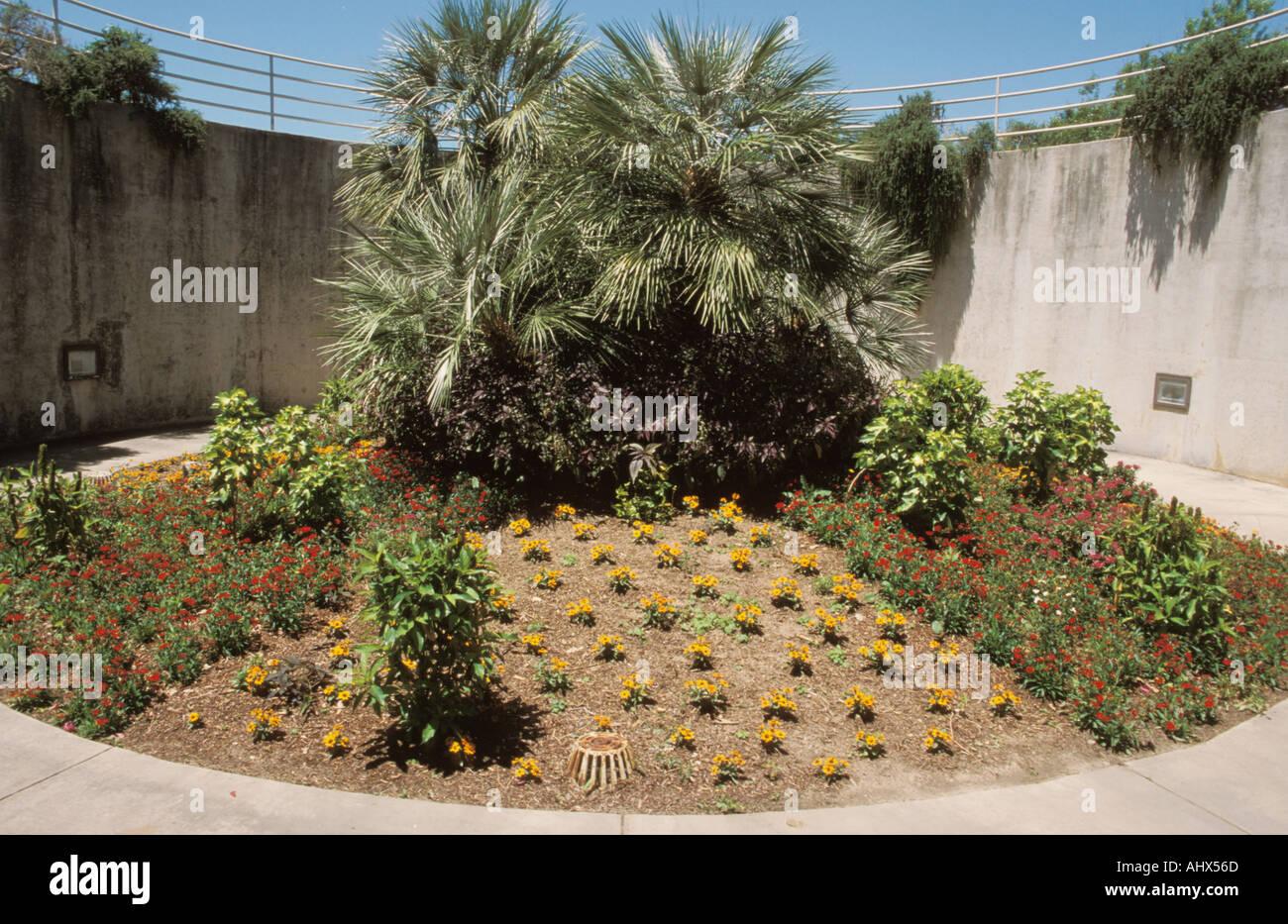 San Antonio Texas Usa Botanical Stock Photos & San Antonio Texas Usa ...