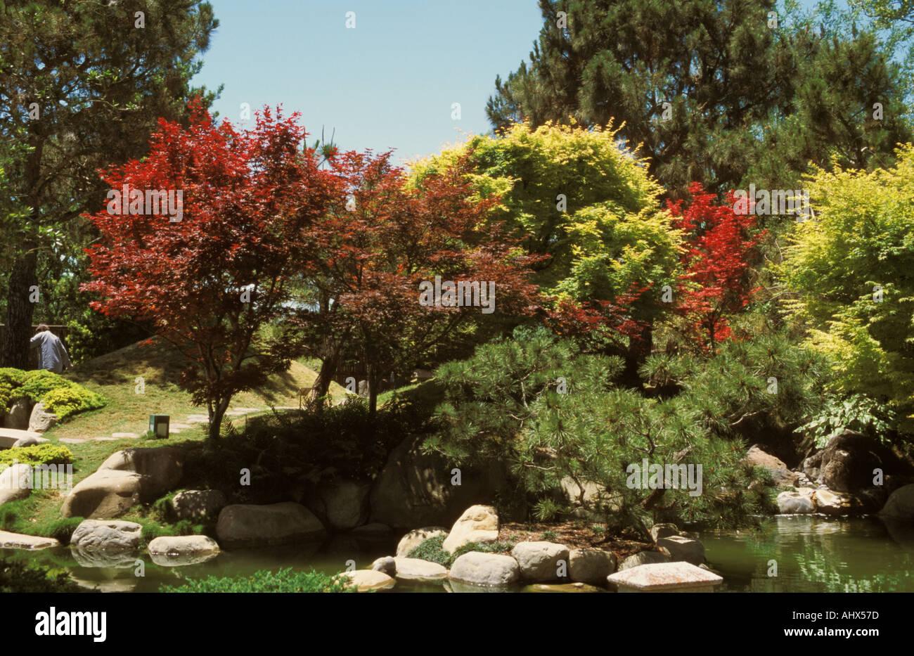 San Antonio Texas USA Botanical Garden Japanese Kumamoto en garden ...