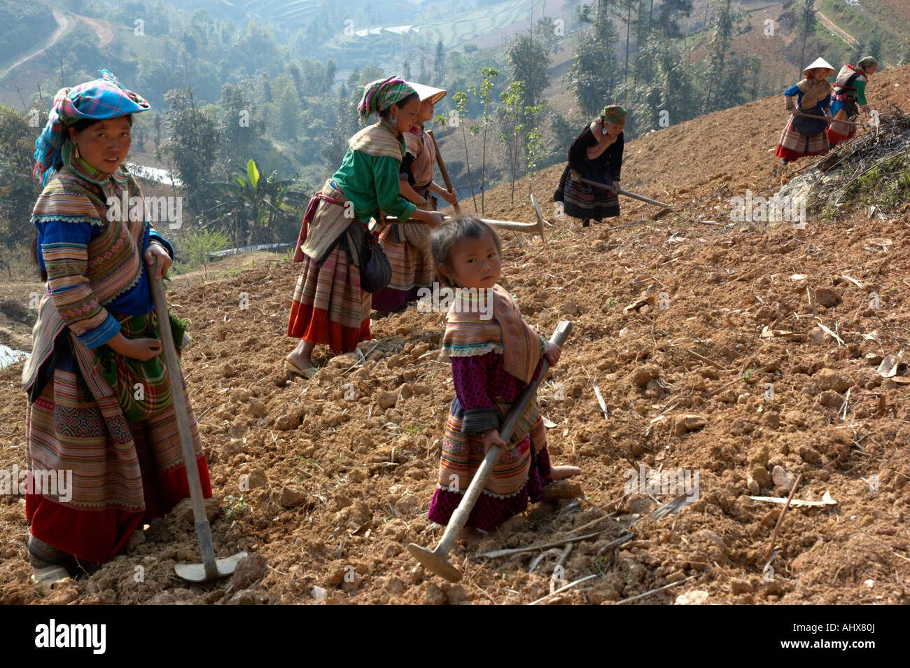 Women From The Flower Hmong Hill Trlbe Working in the Fields,  Bac Ha, near Sapa, Vietnam Stock Photo