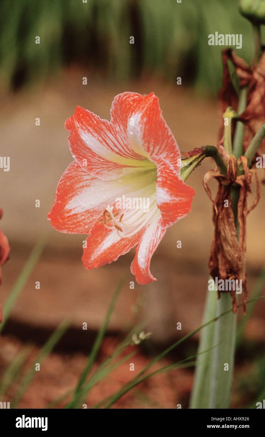 Houston Texas Usa Mercer Botanical Stock Photos & Houston Texas Usa ...
