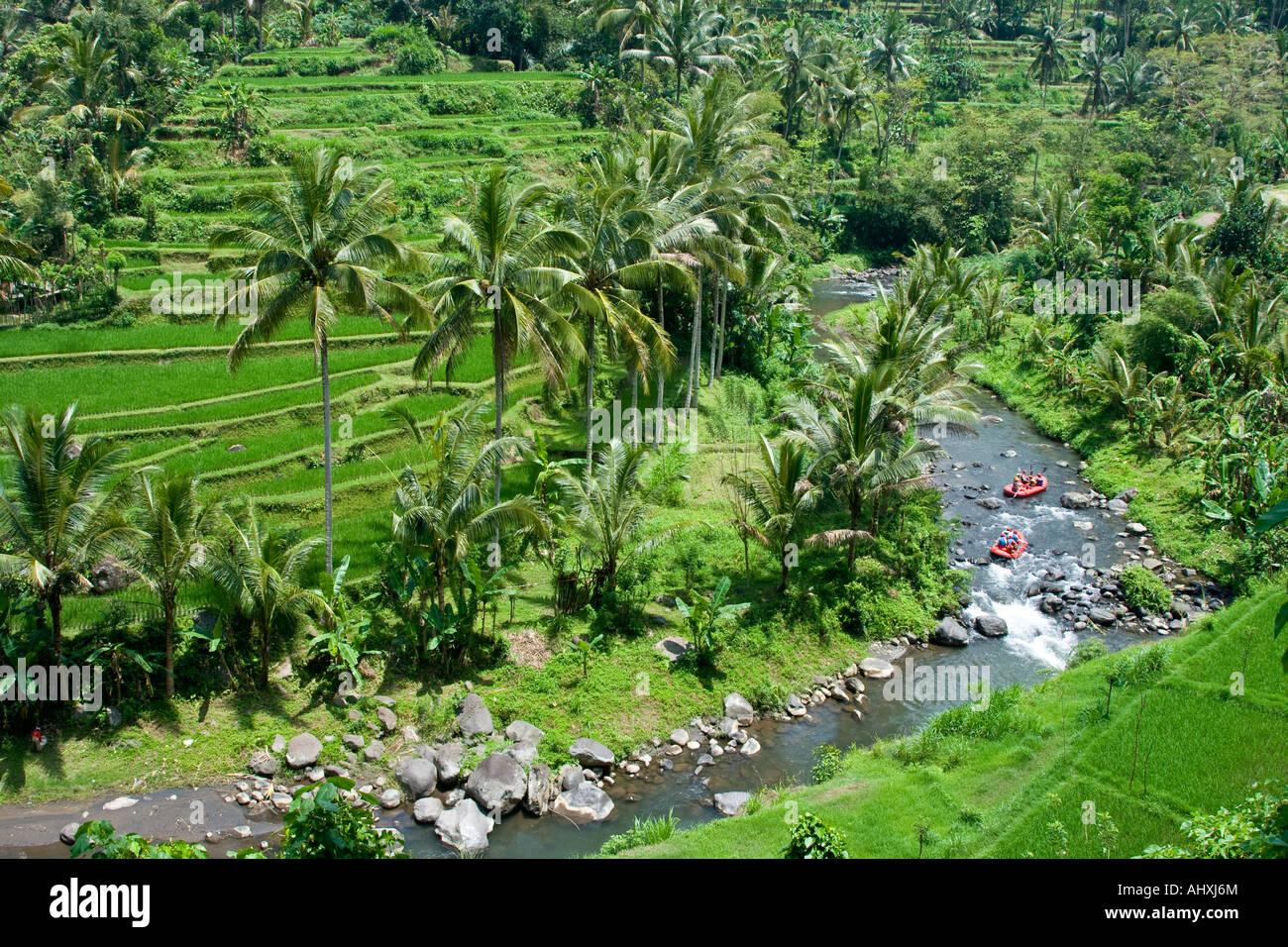 Rafting Ayung River Gorge Rice Terraces Ubud Bali Indonesia Stock Photo Alamy