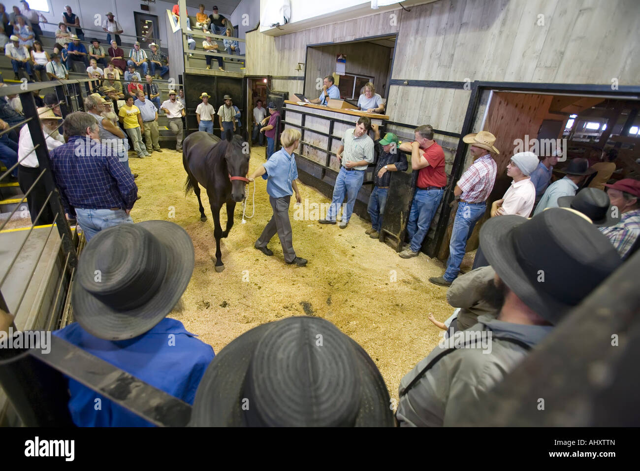 Amish farmers at horse auction - Stock Image