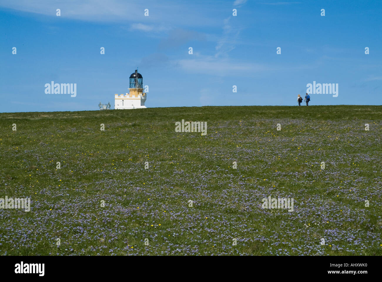 dh Brough of Birsay BIRSAY ORKNEY Blue Spring Squill flowers tourist couple walking to Birsay lighthouse Stock Photo
