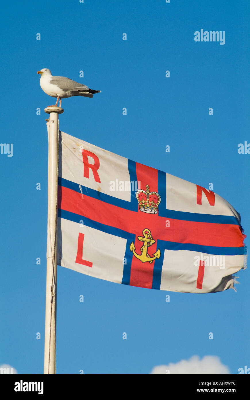 dh RNLI flag FLAG UK Seagull sitting on Royal National Lifeboat Institution flag - Stock Image