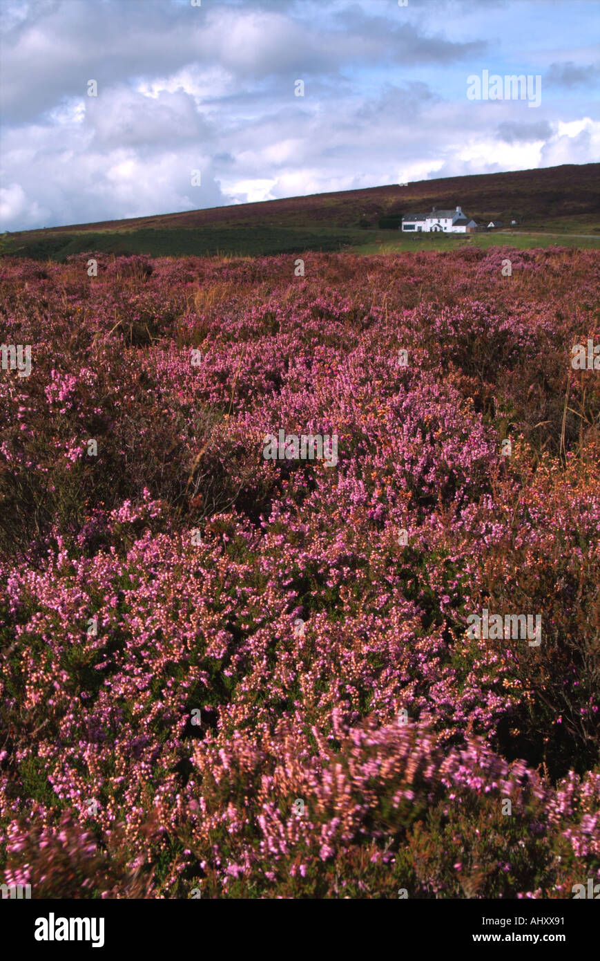 The Warren House Inn pub nestled amongst heather clad moorland Dartmoor Devon UK - Stock Image