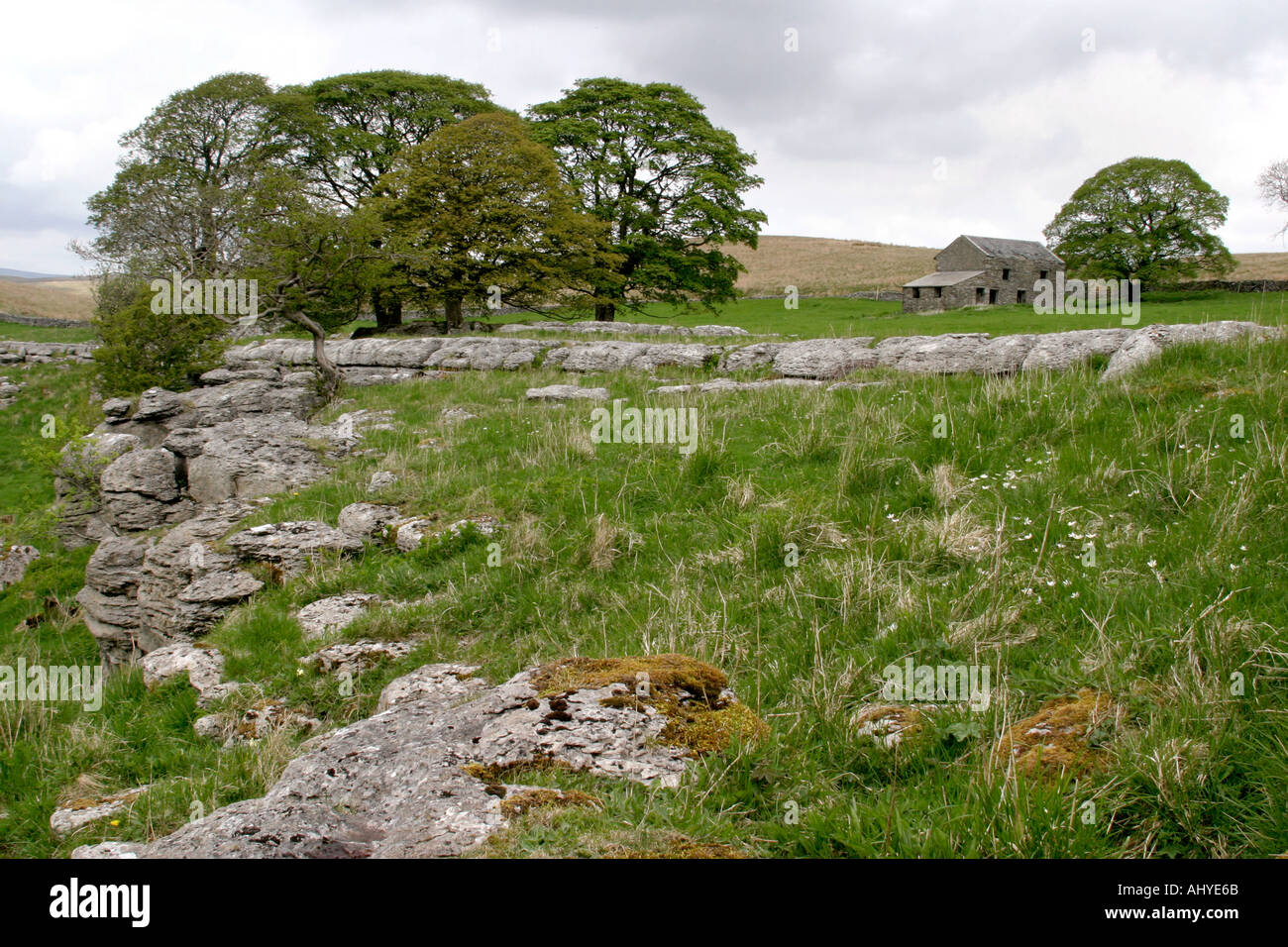 6094 Near Brow Gill Cave nr Horton in Ribblesdale Yorkshire Dales - Stock Image