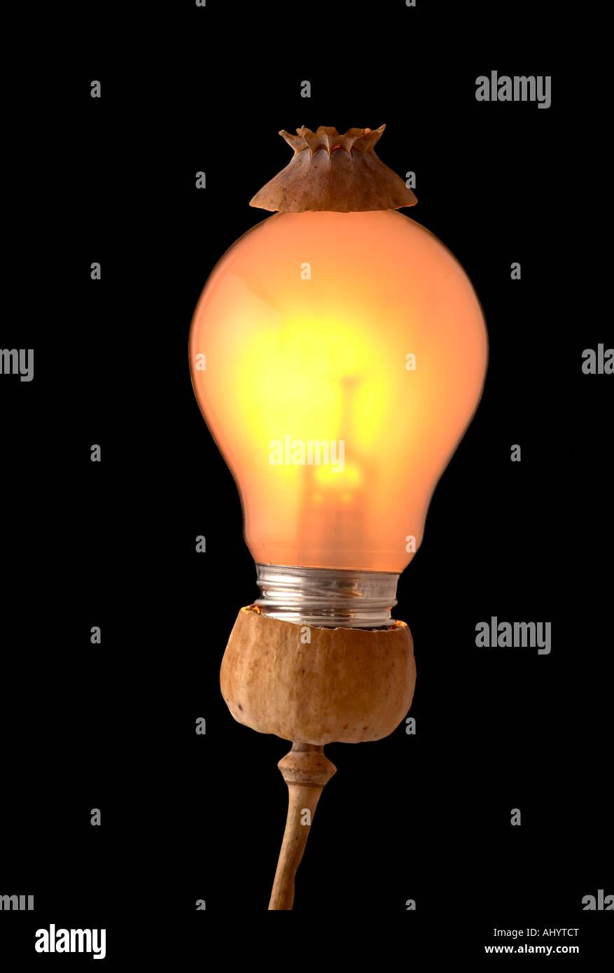 poppy head and bulb Stock Photo