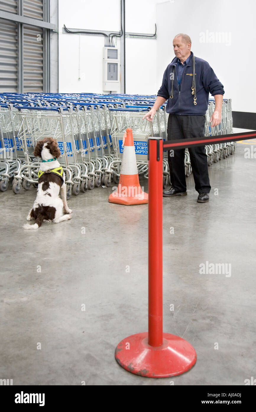 Training dog to search for explosives - Stock Image