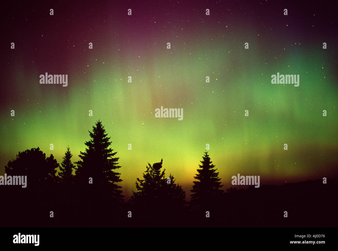 glowing green aurora borealis light up the night sky over a grove of