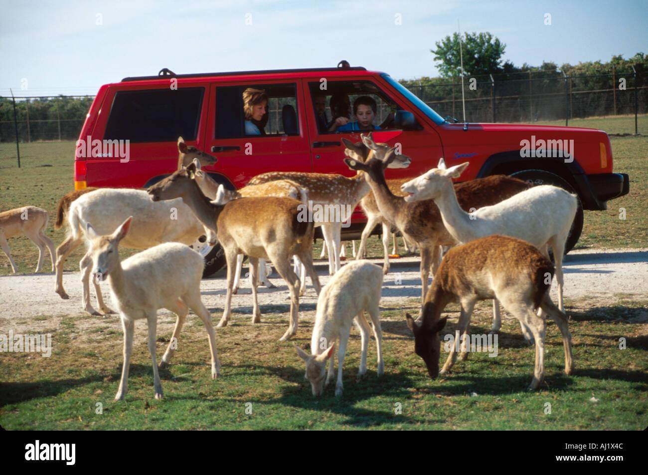 Safari In Ohio >> Ohio Ottawa County African Safari Wildlife Park Visitors Feed Exotic