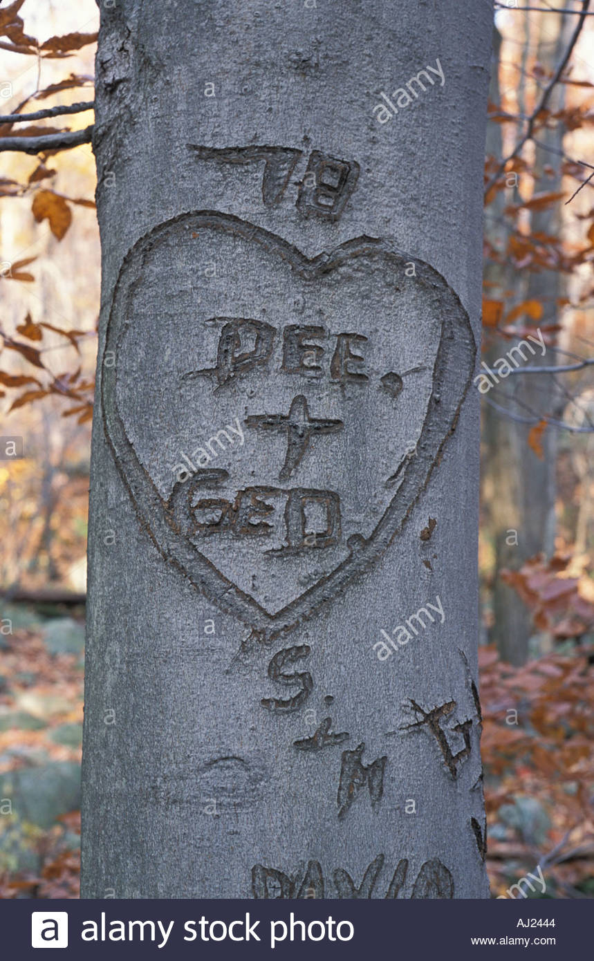 Tree With Names And A Heart Carved Into It Stock Photo 1188931 Alamy