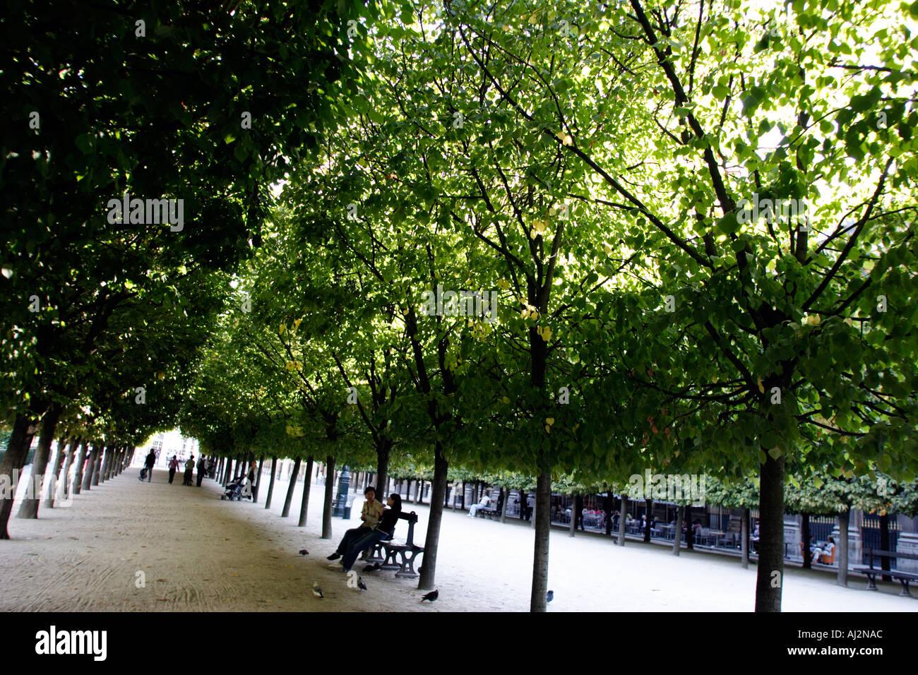 Paris France Jardin Du Palais Royale Royal Palace Garden Trees