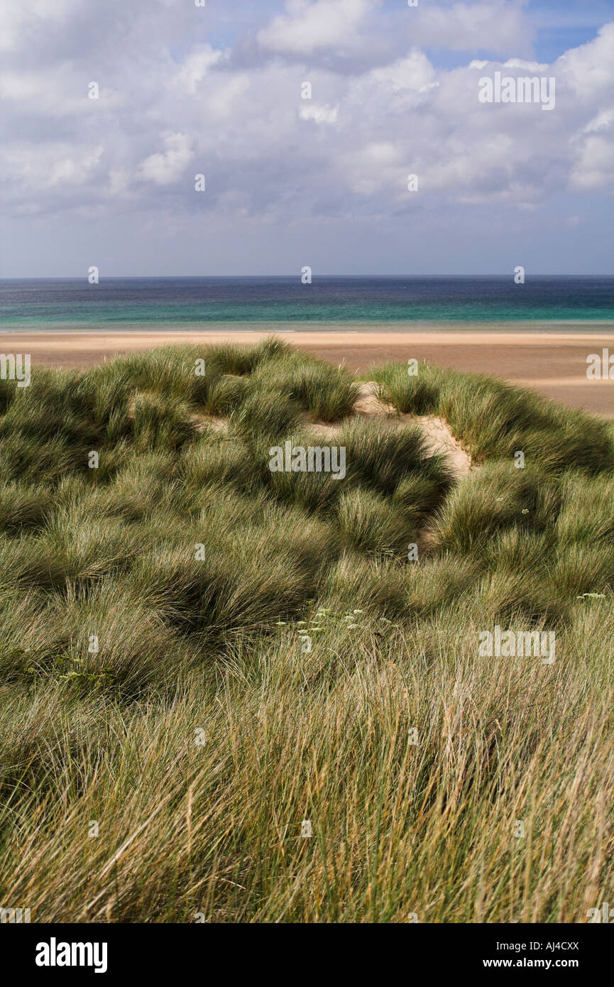Sand dunes with marram grass (Ammophila arenaria) at Porth Kidney Sands near St Ives, Cornwall, UK - Stock Image