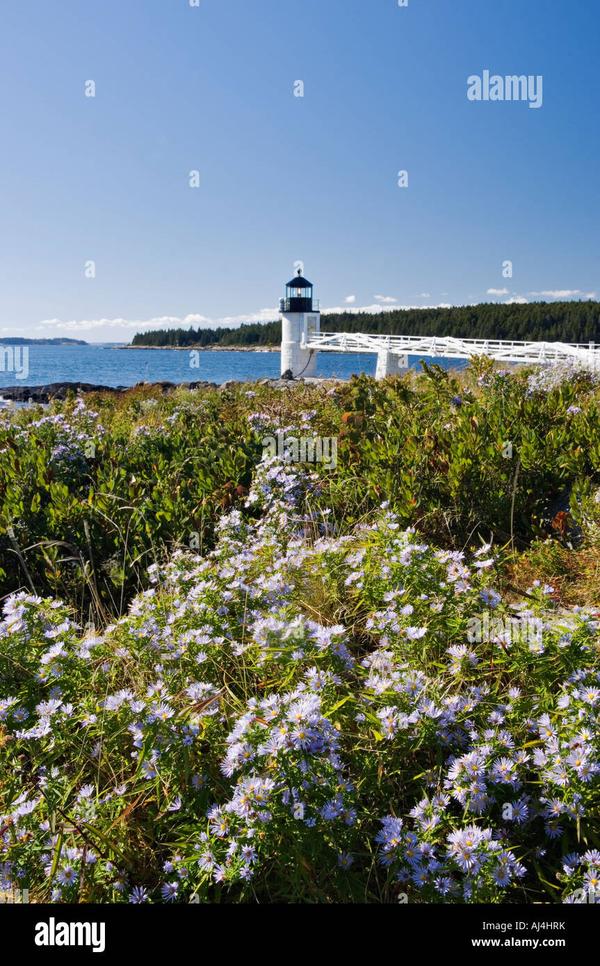 Blooming Asters on the Shore in Front of Marshall Point Lighthouse Port Clyde Maine Stock Photo
