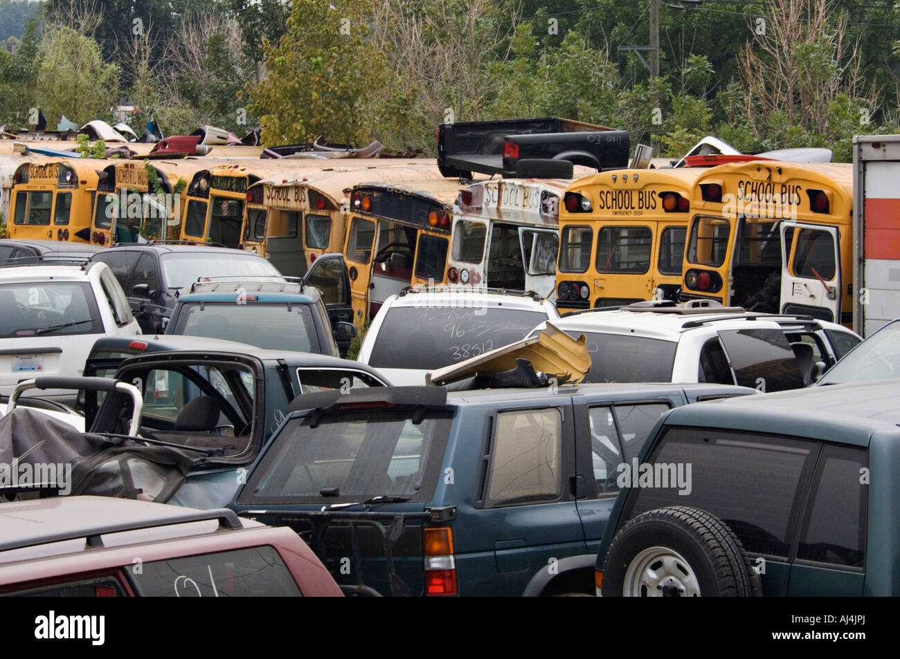 Vehicles including School Buses in Auto Salvage Yard