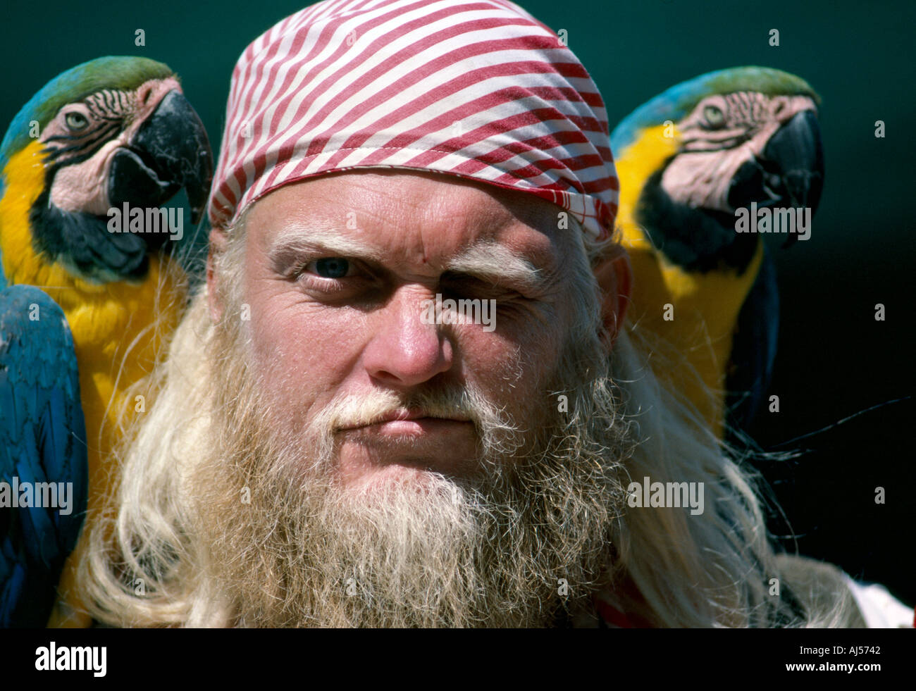 CA San Francisco Street Performer at Fisherman s Wharf area pirate with parrots - Stock Image
