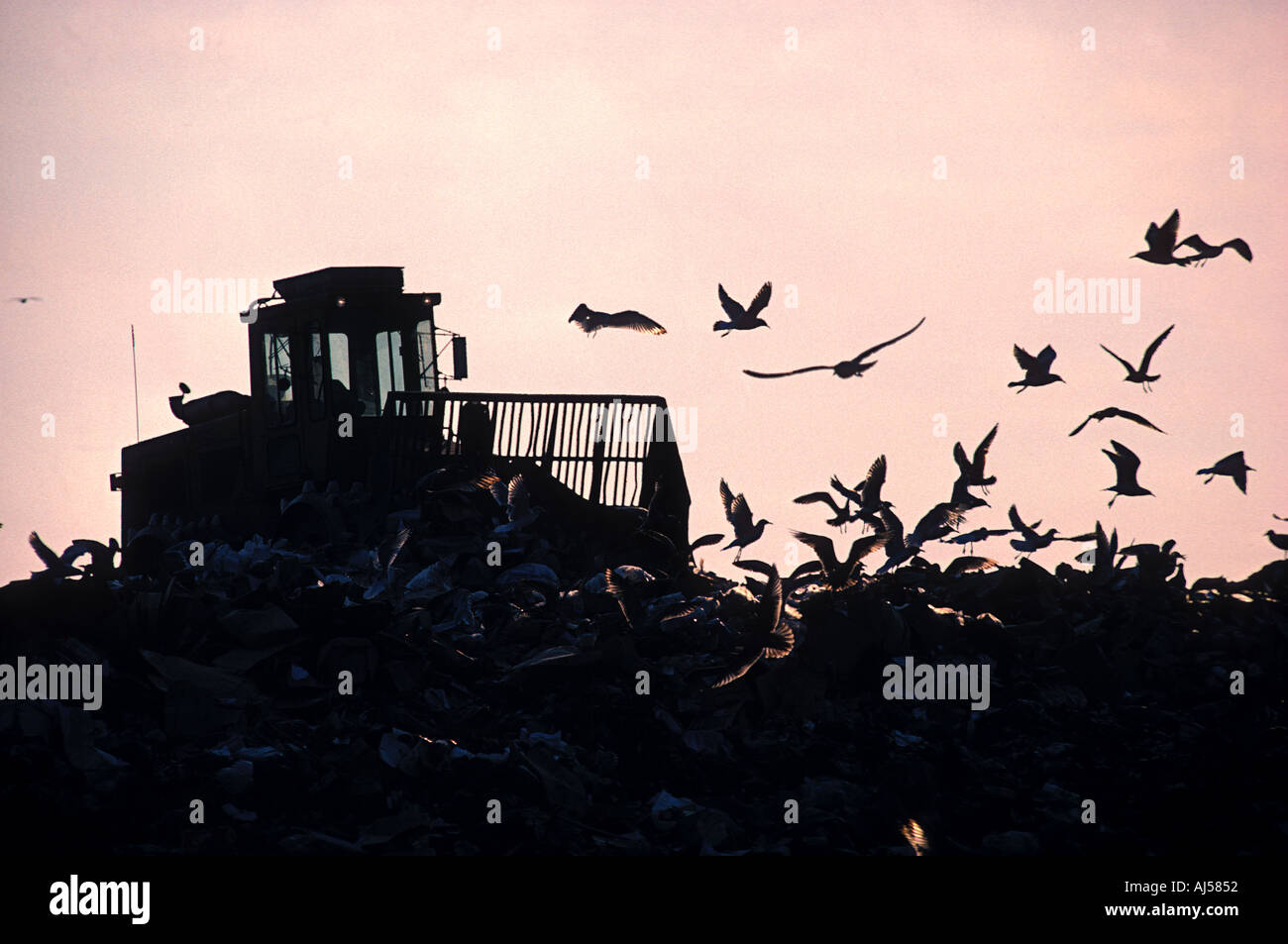 bulldozer pushing garbage in landfill while seagulls circle - Stock Image