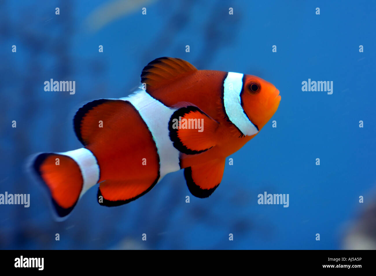 Finding Nemo Stock Photos & Finding Nemo Stock Images - Alamy