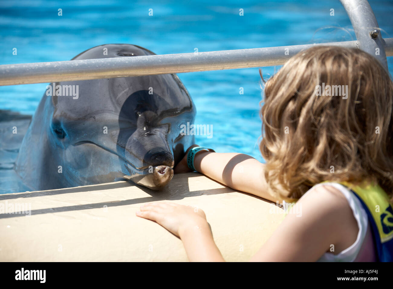 Bottlenose dolphin allowing girl to stroke it at Pet Porpoise Pool oceanarium at Coffs Harbour in New South Wales Stock Photo
