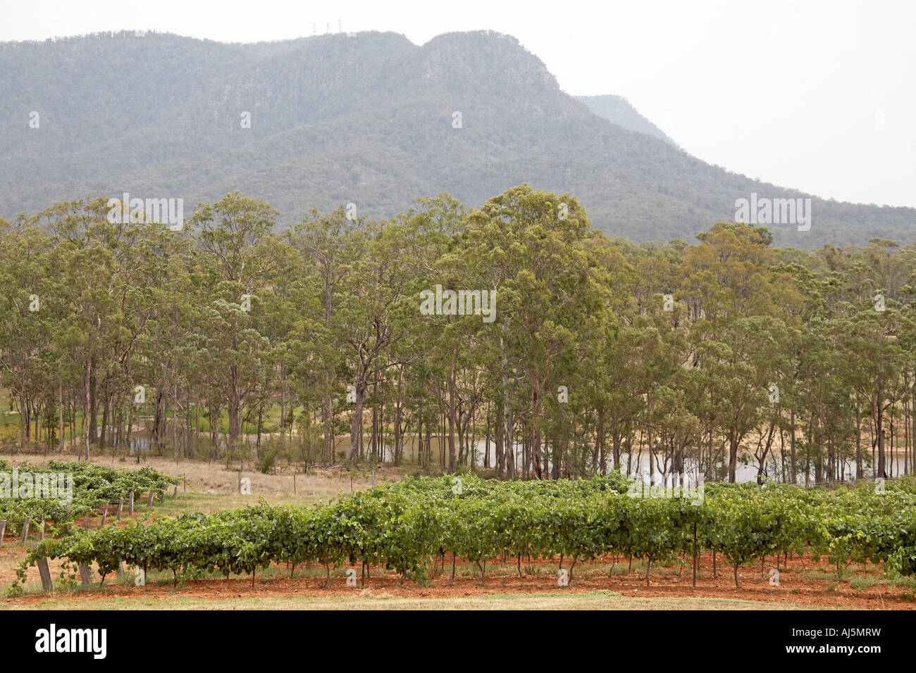 Mountains and gum trees near Broke in Hunter Valley wine growing area of New South Wales NSW Australia Stock Photo