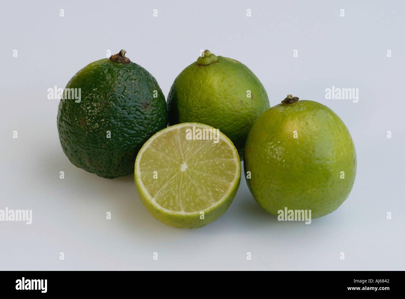 Lime fruits Citrus latifolia Stock Photo