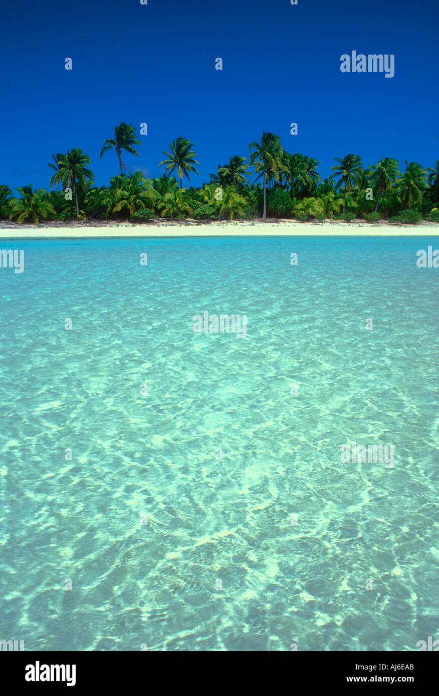 Palm trees along tropical beach in the Cook Islands Polynesia South Pacific Ocean - Stock Image