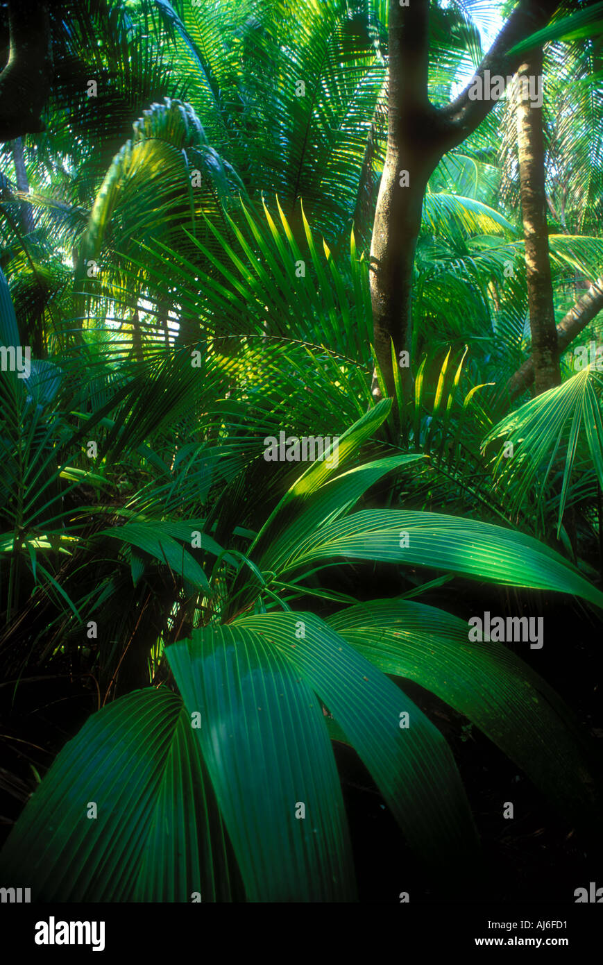 Dense tropical foliage and vegetation in Belize Caribbean Property Released Image - Stock Image