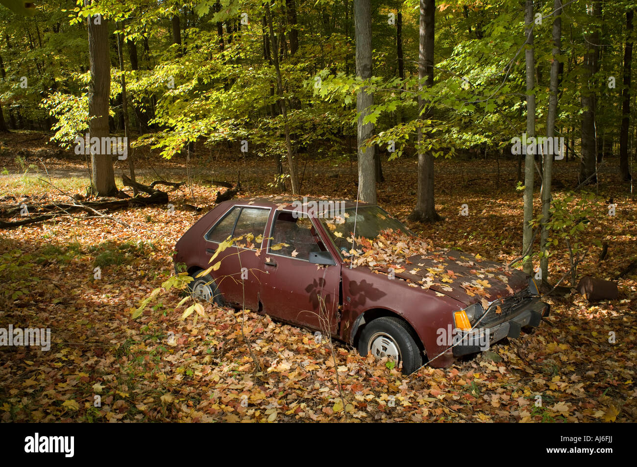 Old Car In Woods Stock Photo 14637833 Alamy