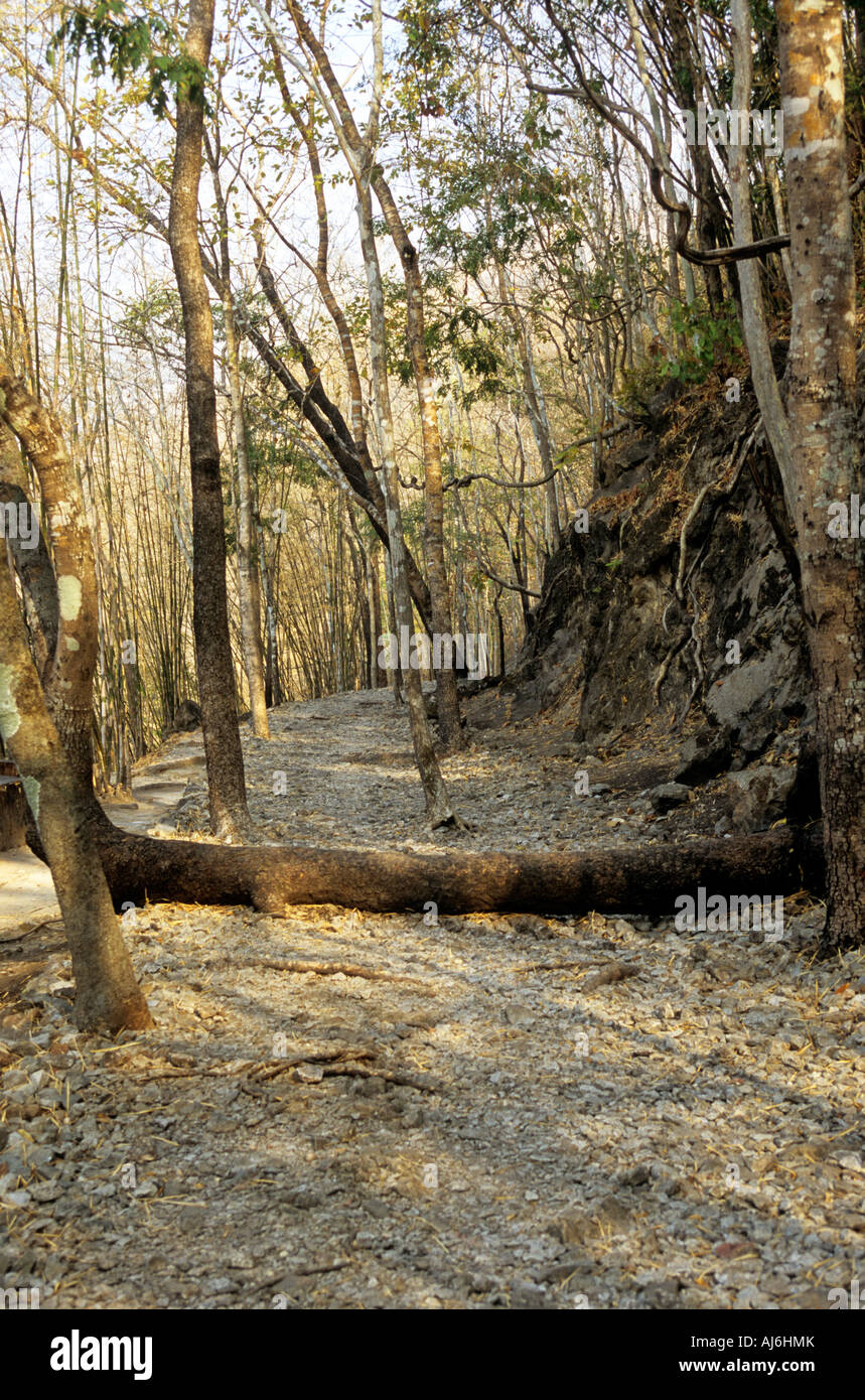 Part of the former Burma-Thailand Railway track bed near Konyu Cutting (Hellfire Pass), Thailand. - Stock Image