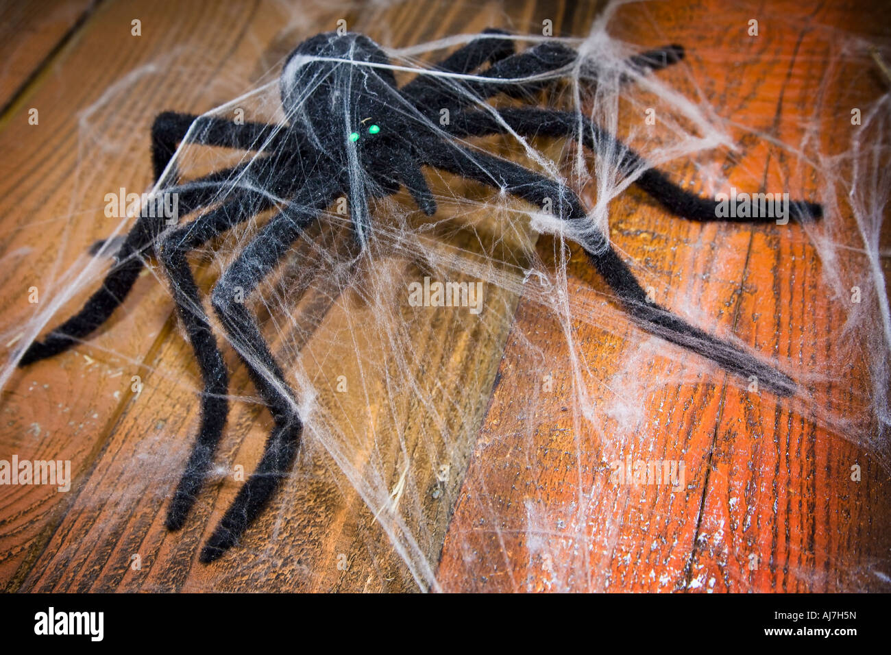 Enormous Halloween spider - Stock Image