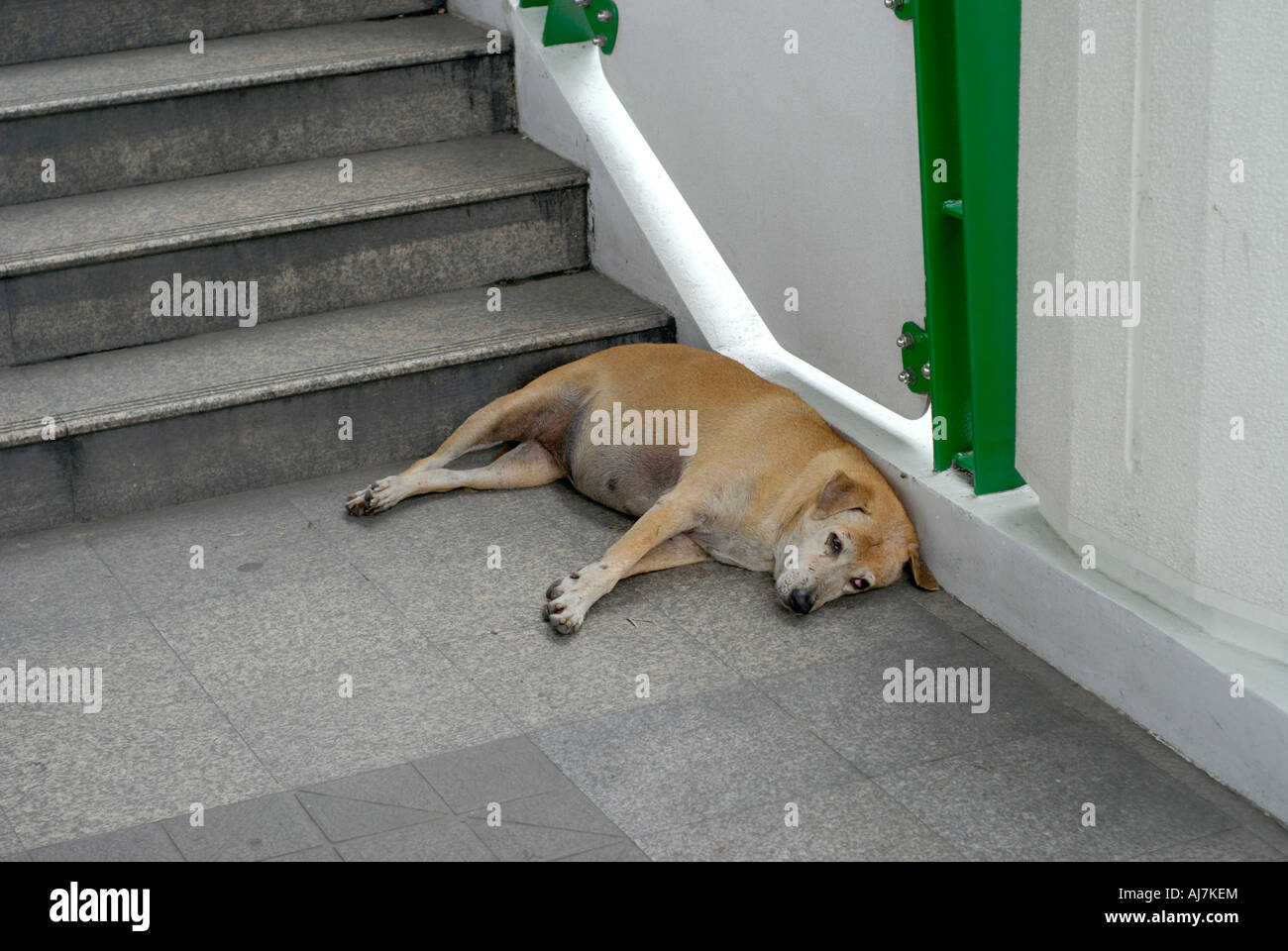 An old stray dog is sleeping at Sukkhumvit Station Bangkok Stock Photo