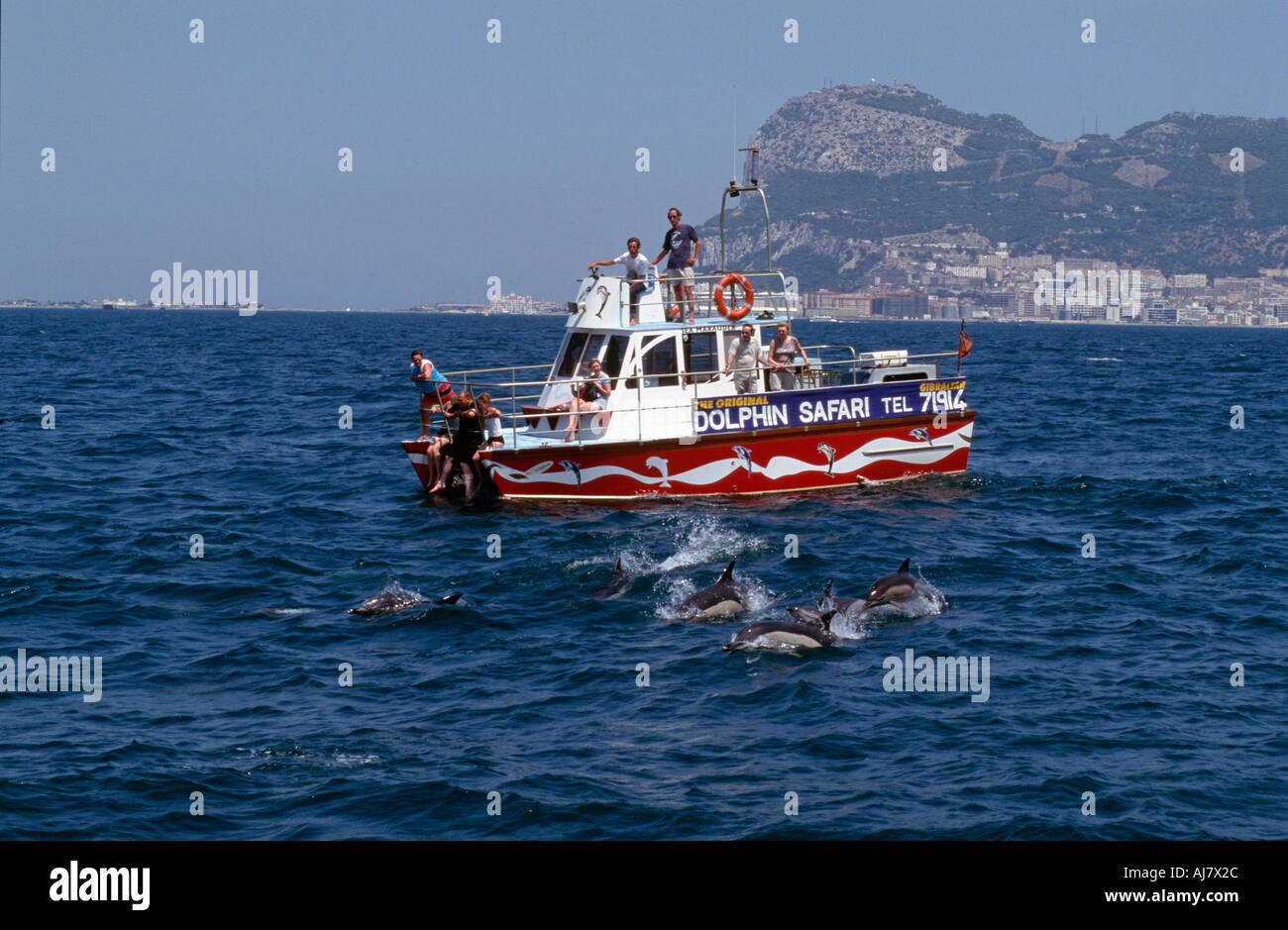 Dolphin watch boat watching a pod of dolphins with the Rock behind Gibraltar - Stock Image