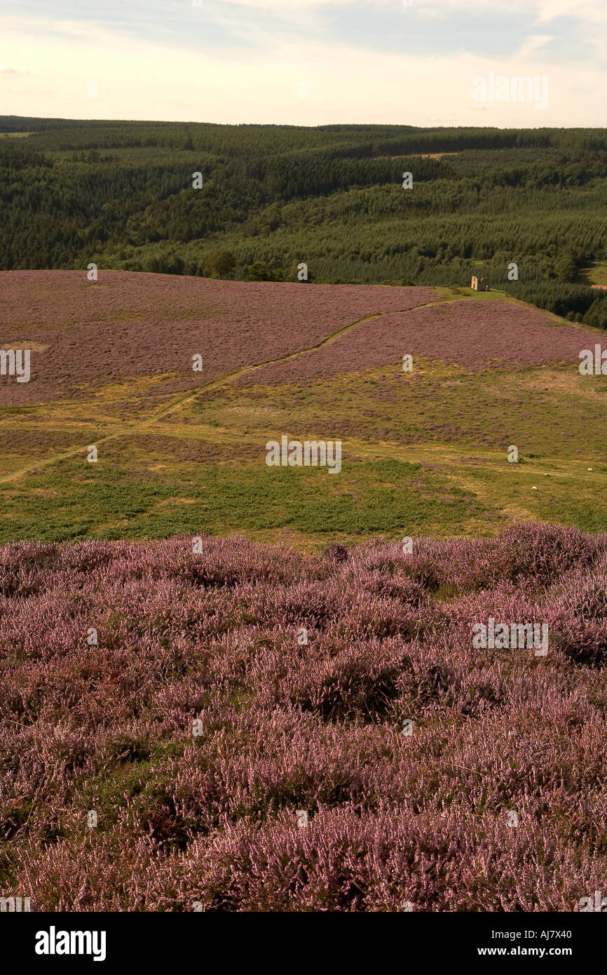 Skelton Tower folly Levisham Moor August Heather time North York Moors National Park England - Stock Image