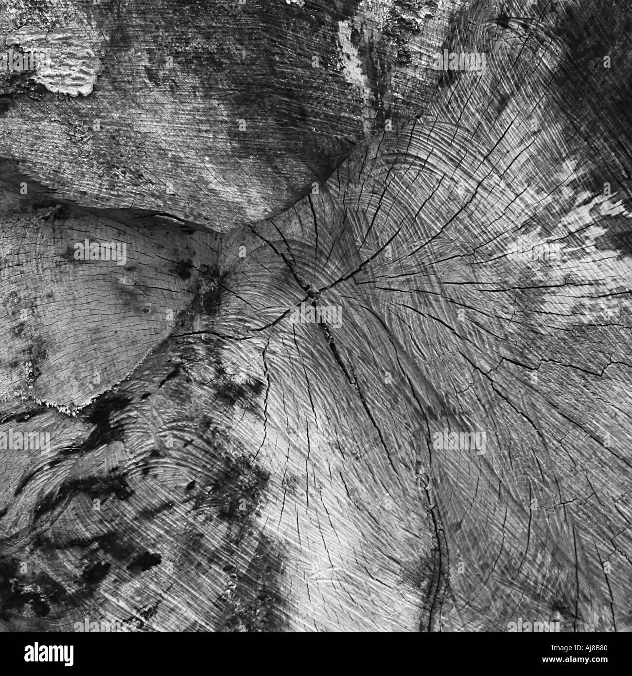 Log section - Stock Image