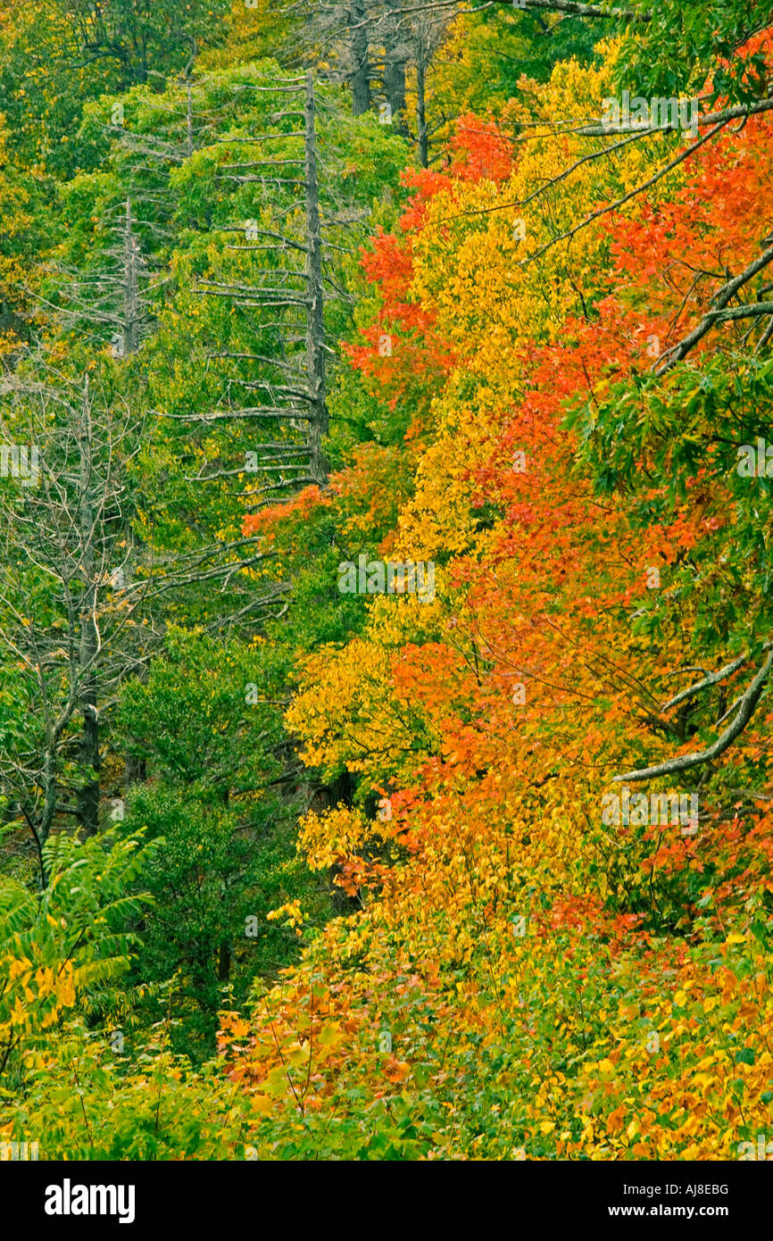 Shenandoah National Park trees in fall color Stock Photo: 14656227 ...