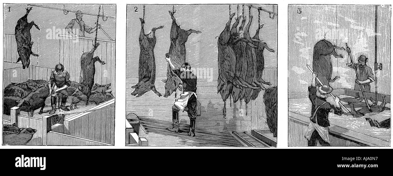 Armour Company s pig slaughterhouse Chicago Illinois USA 1892  - Stock Image