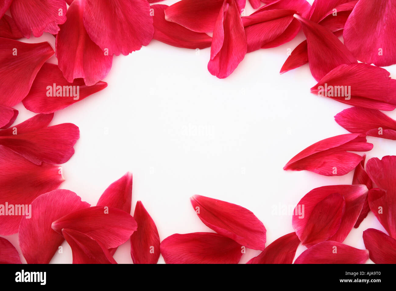 Frame of petals with white copy space Ideal for wedding invitations ...
