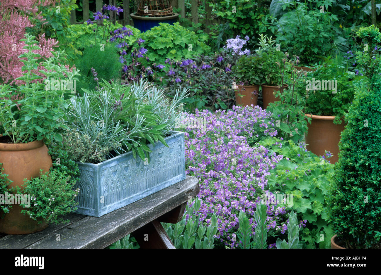 Cottage Garden Pots Cottage garden herbs in pots curry plant thyme sage stock photo cottage garden herbs in pots curry plant thyme sage workwithnaturefo