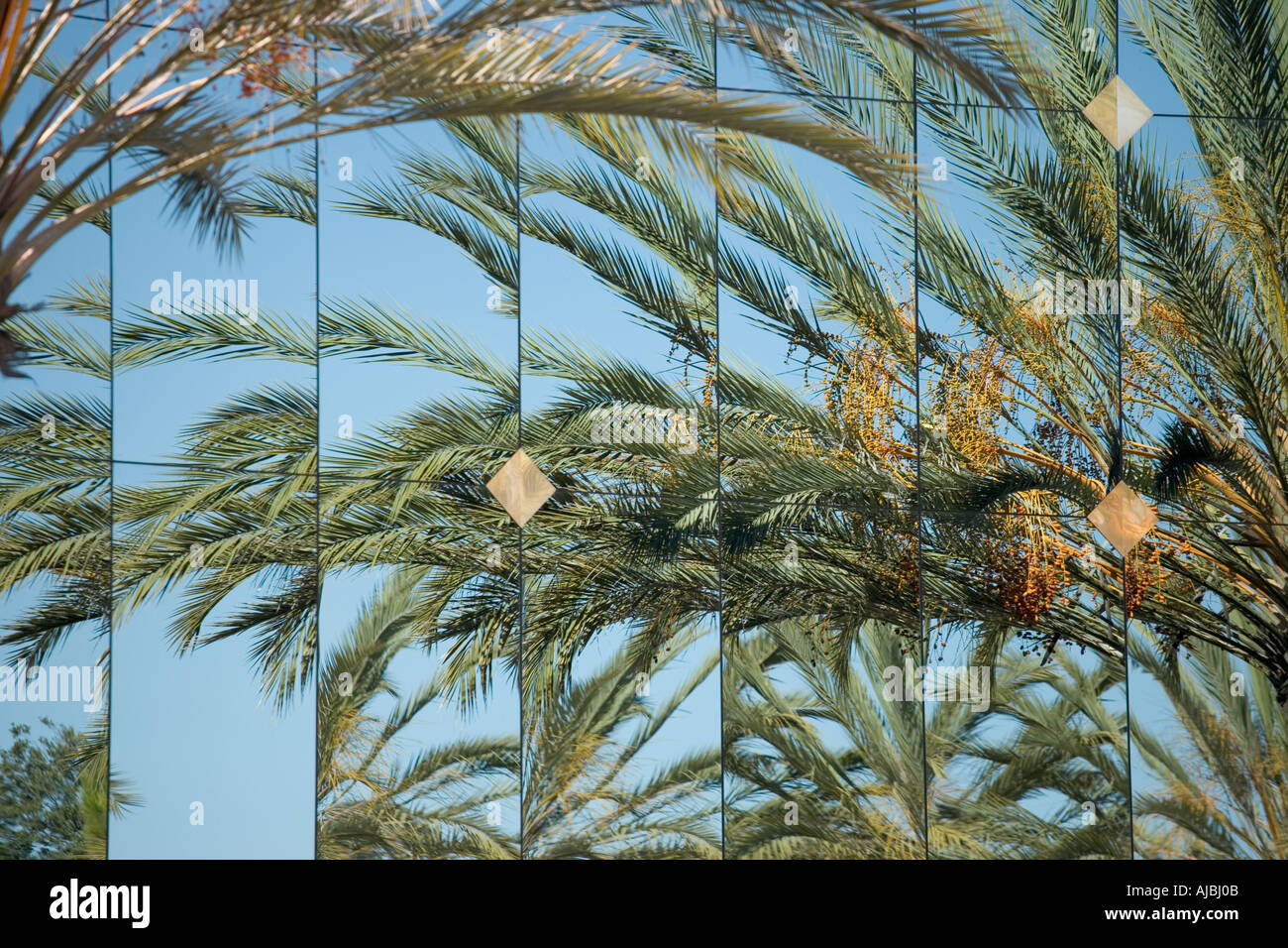 Multiple reflections of a palm tree on a mirrored surface building  Stock Photo