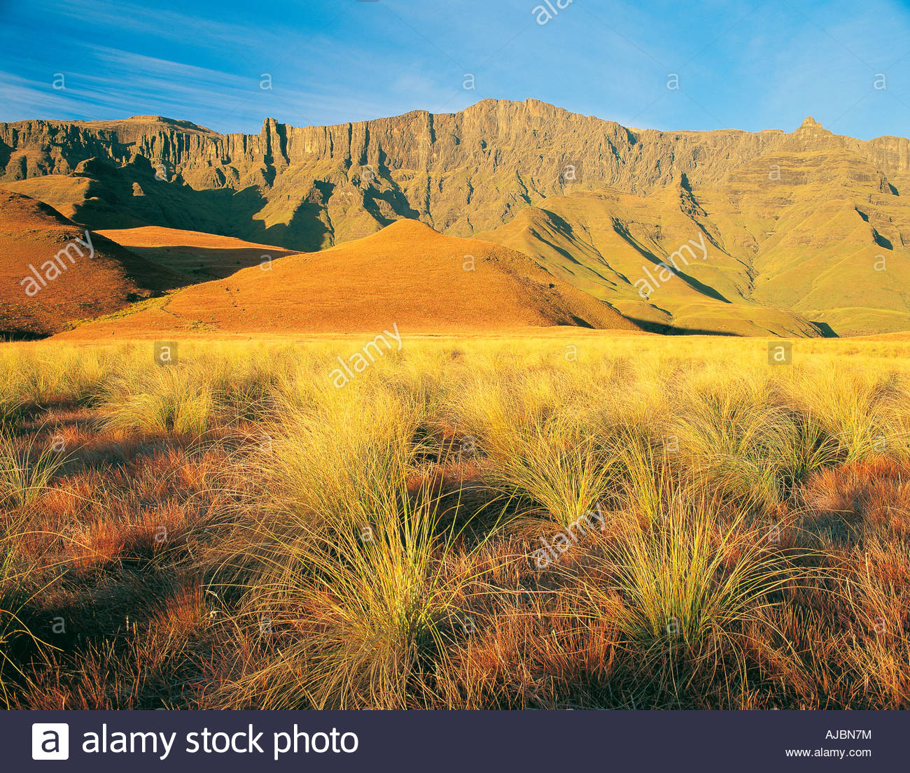 Scenic View of  the Mountain Range with Bushveld Grass in Foreground - Stock Image