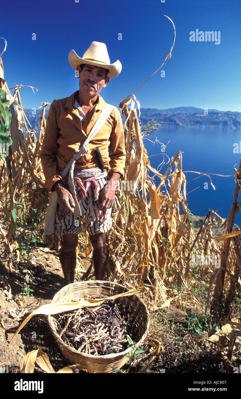 Tzutujil Maya farmer from Santiago Atitlan in his maize field milpa high on the slopes of San Pedro Volcano Guatemala - Stock Image