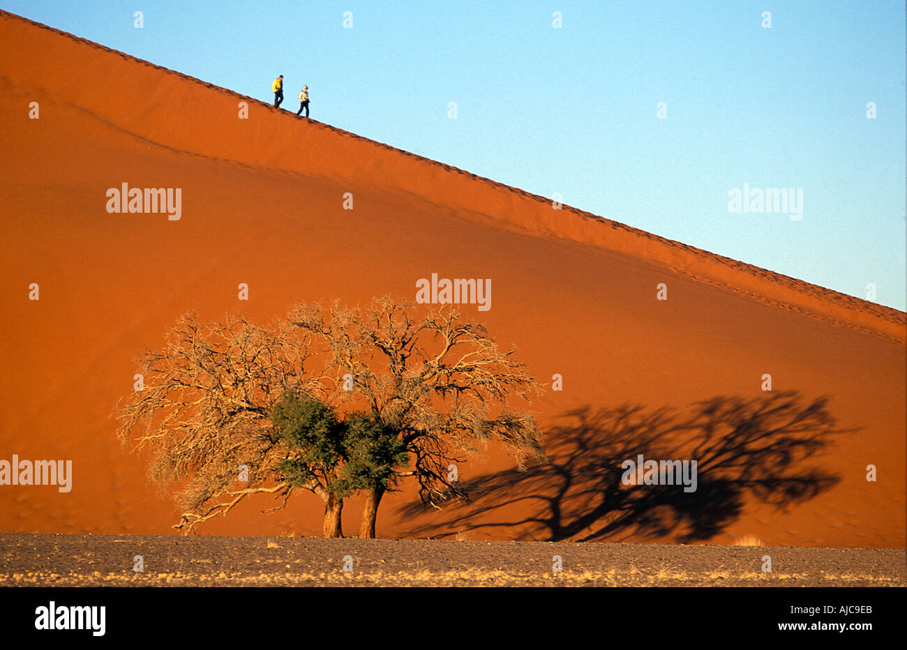 Early morning sun lights Dune 45 travellers heading down from top Namib Naukluft National Park Namibia - Stock Image