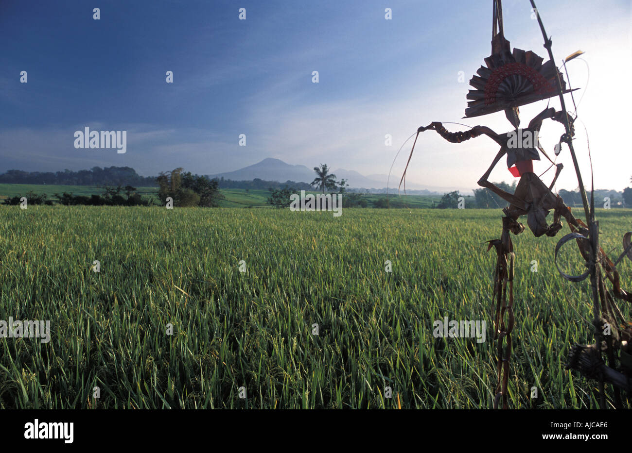 Rice fields at dawn Gunung Batukau in the distance Inland of Yeh Gangga Bali Indonesia Rice Goddess Dewi Sri offering - Stock Image