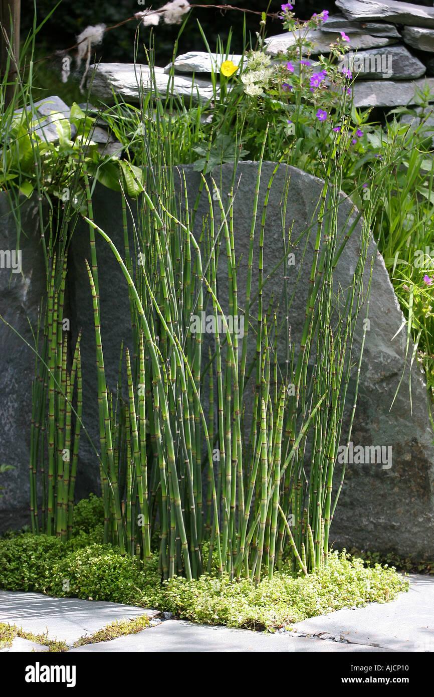 the cumbrian fellside garden designers kim wilde richard lucas chelsea flower show 2005 stock image - Wilde Garden