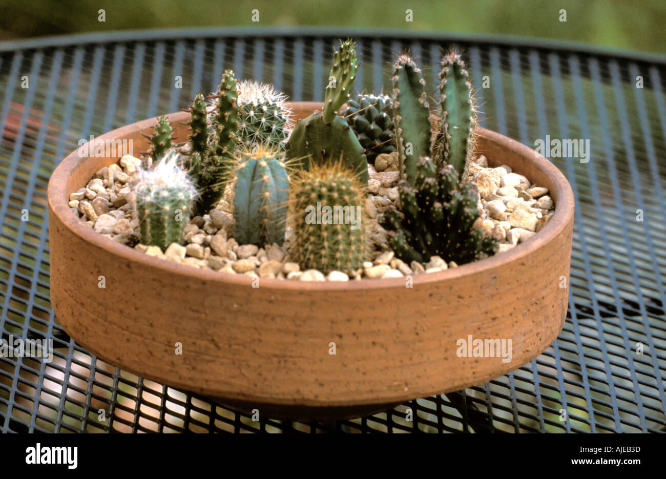 Succulent garden in a pot cactus stock photo 1239868 alamy succulent garden in a pot cactus workwithnaturefo