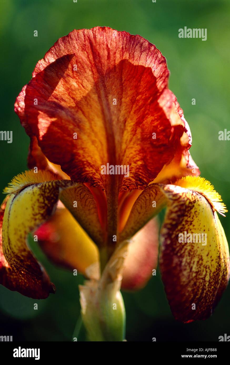 Iris Goddess Of Rainbow Stock Photos & Iris Goddess Of Rainbow Stock ...