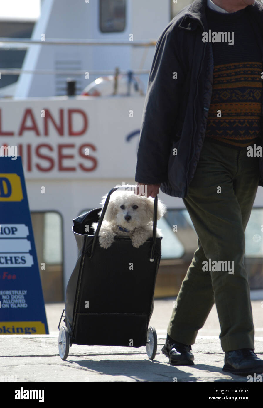 Lazy Dog being carried in shopping trolley Stock Photo: 1244081 - Alamy