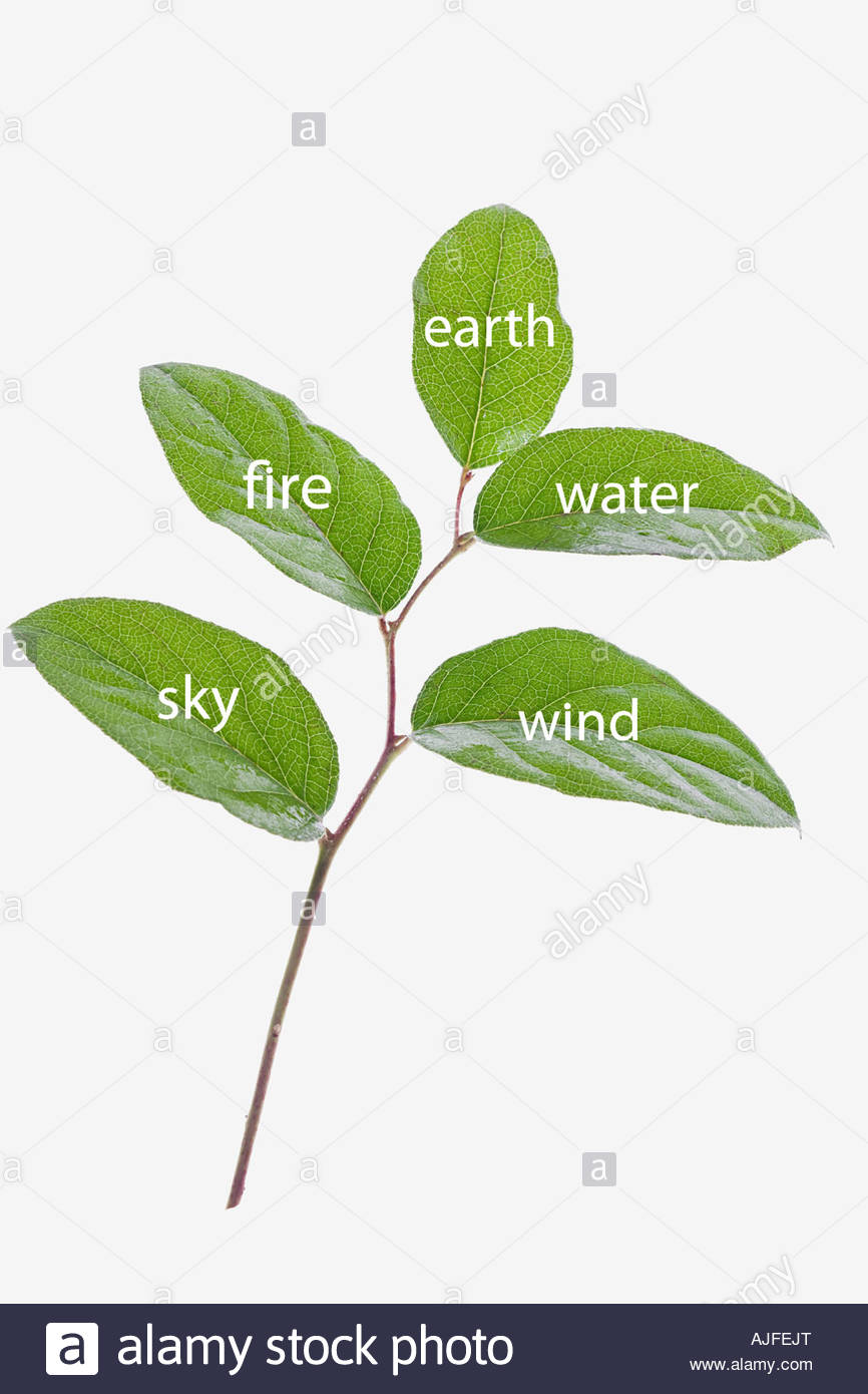 Elements on leaves - Stock Image